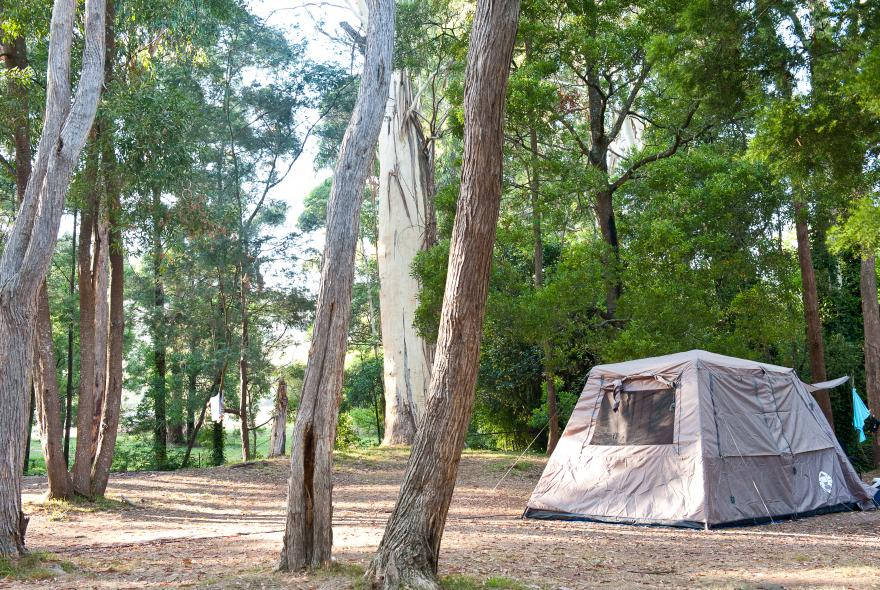 BIG4 Yarra Valley Park Lane Holiday Park - Powered Swag and Small Tent Sites