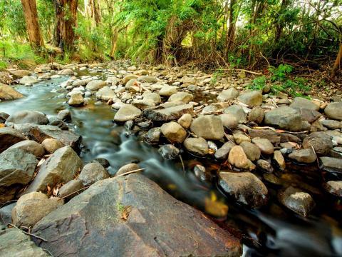 BIG4 Yarra Valley Park Lane Holiday Park - Badger Creek